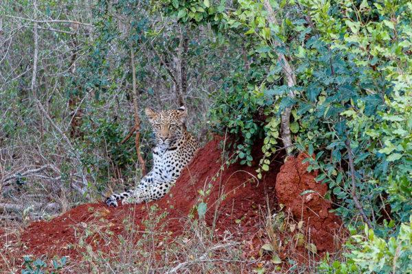 Wildlife, South Africa
