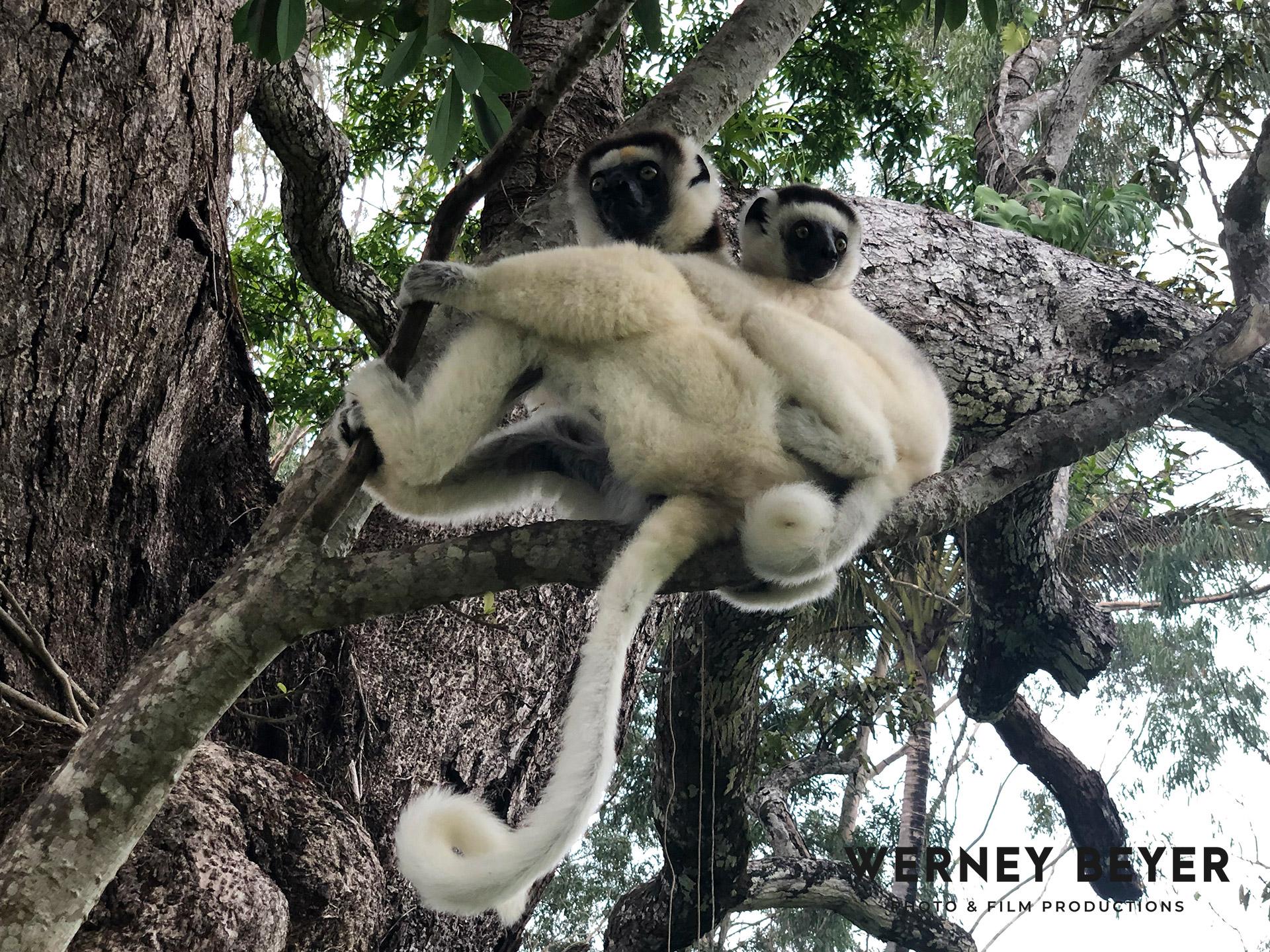 Wildlife, Madagascar